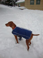 looking for free boarding for my vizsla