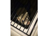 Female Ferret For Sale With Cage!!