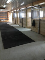 Horse Boarding Paisley-Limited Stalls Left