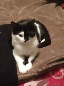 Missing black and white female cat