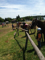 Childrens Horse Camps