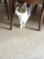 Beautil, loveable and kid-friendly adult cats to rehome