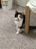 Two years old female cat look for family (Free)