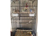 Budgie cage + male and female budgie