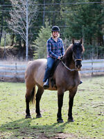 3/4 Percheron gelding for trail riding lease in Barriere