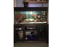 460L Fish tank (aquarium) with cabinet