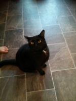 Missing Black Cat in East Chwk Area