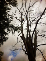 Harmony Tree Service in Your Area ☎4168448484