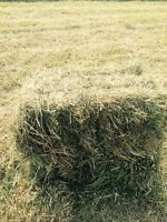 Square bales-hay