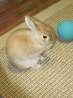 """Neutered adult male rabbit """"Walter"""" : Comes with all accessories"""