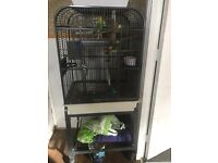 Large cage 4 baby budgies with food and toys