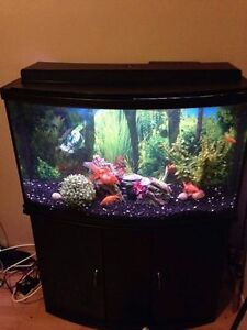 aquarium 45 gallons Devant arroundi