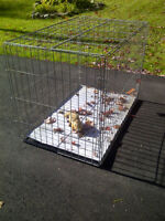 Dog Cage Travel Cage