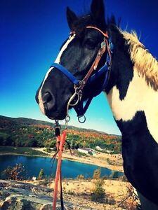 819 210 9379  venez faire equitation !!  Gatineau Ottawa / Gatineau Area image 2