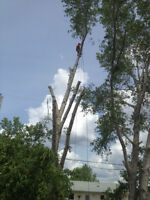 Insured Tree Removal & Pruning - Experienced Climbers