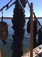 Wanted: part time employees for small mussel operation