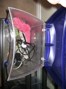 Curved front betta tank Kitchener / Waterloo Kitchener Area image 2