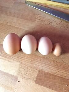 Eggs for sale.