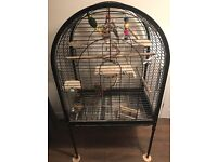 Kakariki, Cockatiel and large bird cage