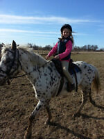 Looking for Part-boarder for our Mare
