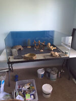 Reptile tank with accessories