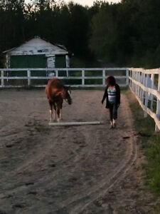 Pension/demi-pension pour chevaux secteur Shipshaw Saguenay Saguenay-Lac-Saint-Jean image 7
