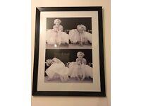 Black & White Marilyn Monroe Picture