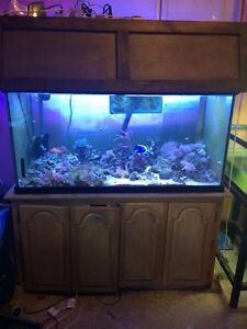 Selling my 120 gallon 4 ft tank complete saltwater setup