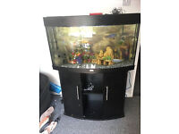 full tropical chilards tank with every think 2 air stone and pump plus extras