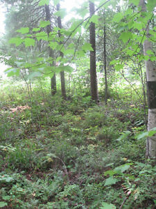 Lot for Sale Prince George British Columbia image 1