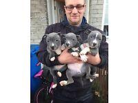 Stuffy pups