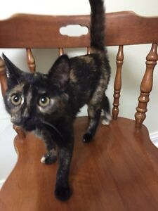 Free kitten to a loving home
