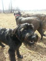 DOG WALKS - PUPS 'N' KITTENS PET SERVICES