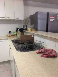 GUY WANTED - CLEAN FRIENDLY FURNISHED APARTMENT IN PYRMONT