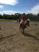 Pony Rides / Petting Zoo For Parties And Events