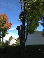 Service complet arbres