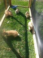 5 Bunnies!!