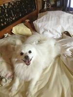 Lost Dog $1000 REWARD