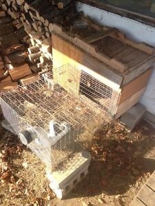 Large rabbit cage with feeder and 3 water bottles  Kawartha Lakes Peterborough Area image 1