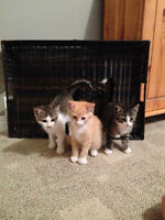 ♥BEAUTIFUL KITTENS FOR SALE♥