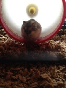 Cage and hamster