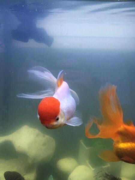 Full fish tank set up 130 litres