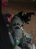 handknit dog sweaters