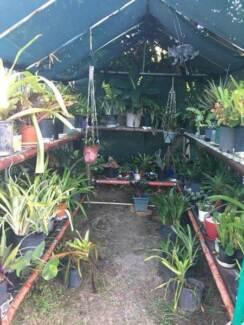 Plants - cheap