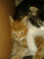 ADORABLE KITTENS DESPERATELY IN NEED OF NEW HOMES!!!