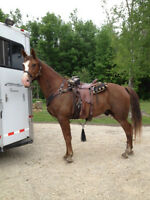 FALL SALE - MAKE AN OFFER! Tennessee Walker Horses