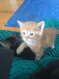 Free Kittens Looking for Forever Homes