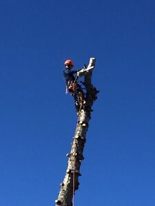 Tree pruning and removal's.