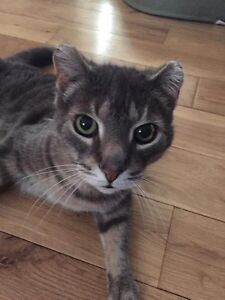 Sweet older cat needs a new home!