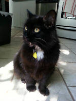 FREE - Cat needs new home by this MONDAY!!